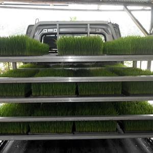 今年の水稲苗の田植えが終わりました