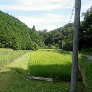 猛暑の中の草刈