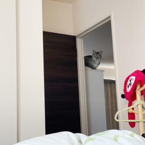 織田信成くん…&癒しの猫どん♪