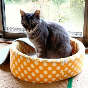 ミンミンと猫どん、似てるかな♪