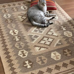 キリム好きの猫どん♪