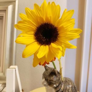 イソジン&今日の花♪