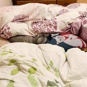 猫どんの新しい寝場所(候補)♪