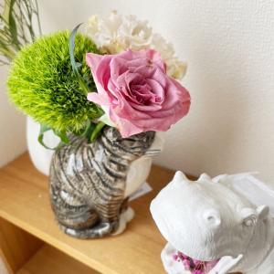 今週のお花、緊張感のない猫♪