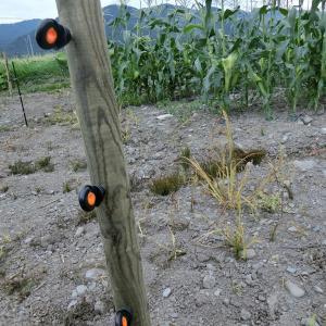 電気牧柵1