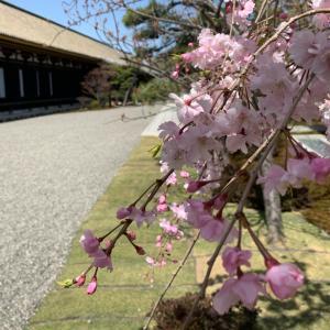 3/31 今年最強開運日に京都旅 三十三間堂、智積院