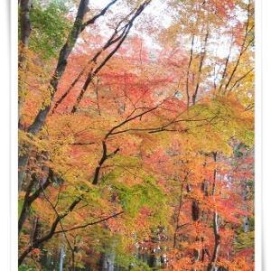 絶景☆秋の香嵐渓