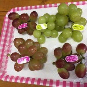 10/8(火)ブドウ買いツアー 第5弾! 新しいブドウ品種 サンヴェルデとの出会い!