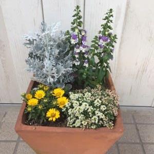 6月を彩るお花たち 寄せ植えは終わり そして 大好きな花色が集まりました