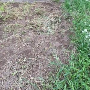 9/23(水)の朝 穴掘りして 残渣をポイ! & 大根畝の延長整備 他