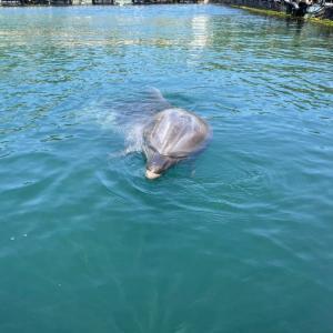イルカ大好き
