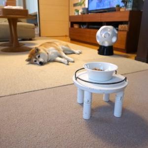 床暖房を満喫中