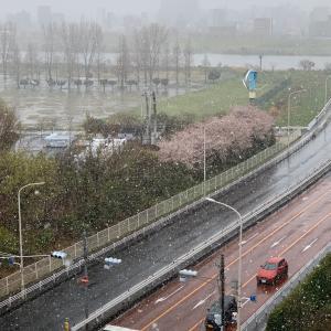 関東でも雪⛄️です