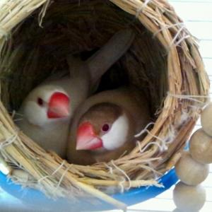 卵、その後(なんて賢いの!)