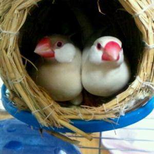 なんと!卵を産みましたぁ