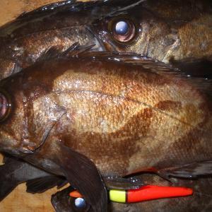 2018 4-28/玉野沖磯の夜釣り(メバル)