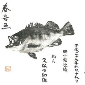 2019  2-10/春告魚(メバル)