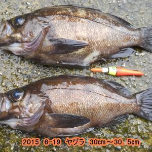 2019 3-31/メバル回想記(No2)
