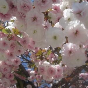 春色ワンピ♪