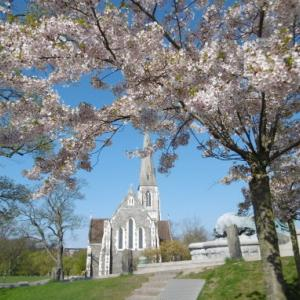小説更新のお知らせ+聖アルバニ教会に桜を添えて