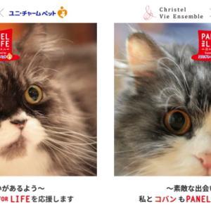 Twitter投稿で100円が寄付される!ユニ・チャームペットの保護猫、保護犬支援Panel for Life