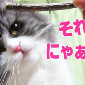 マタタビの木とレイラとコバン 猫たちの反応がゆるすぎる(動画です)