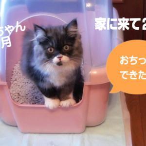 子猫のおトイレ事情 うちに来て2日目、3ヶ月の子猫レイラの動画です