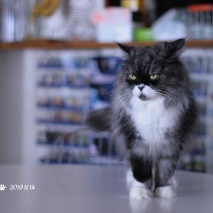 レイラの子猫動画ショートVr他 2019年11月14日のツイートまとめ