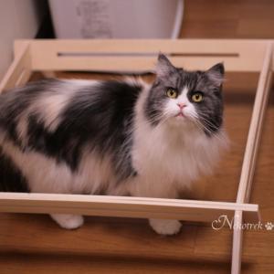 ハンモックに💩した猫さんはこちらです 2019年11月16日のツイートまとめ