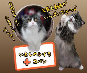 2020年2月11日~14日のツイートまとめ バレンタインデーの猫さんたち