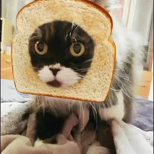 パンこね職人(猫)レイラとコバン 可愛いパンにゃがこねこねする動画です