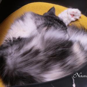 猫のセルフうでまくらが可愛いのです ((o(>▽<)o))