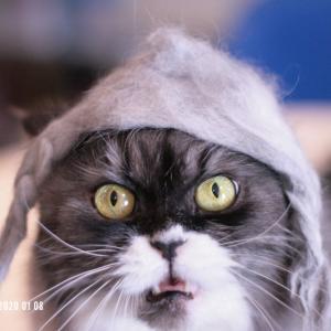 猫毛おさげ完成したので、レイラちゃんにかぶってもらいました