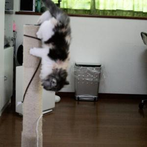 世界猫の日他 8月6日~12日のツイートまとめ