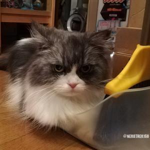 ちりとりほうきセットと猫