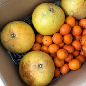 好きな柑橘系ベスト5に入るやつ。