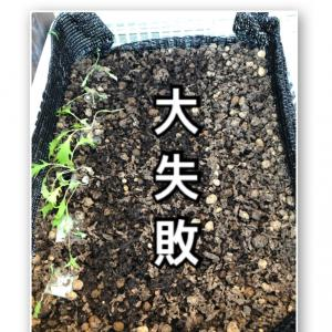 【水耕栽培】大失敗からのテーブルグリーン。