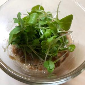 水菜スプラウト納豆。
