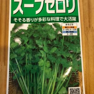 【ベランダ水耕栽培】9/20〜スープセロリの発芽