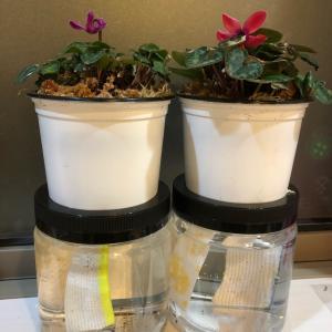 味付け海苔の容器で、底面給水装置。