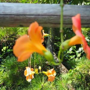 ブログネタの無いときの、花写真