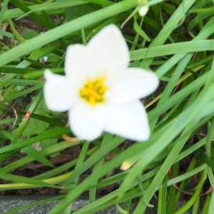 庭の小花々