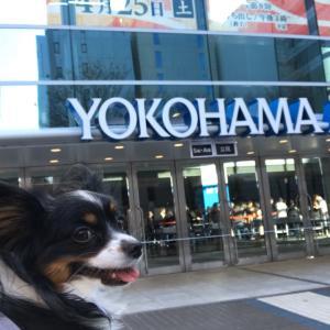 横浜アリーナ「ROCK MUST GO ON」矢沢永吉ライブ