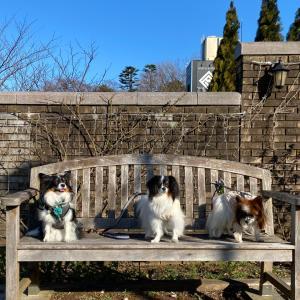 元町山手「DOG DEPT GARDEN」(3)〜パピヨンランチ会その2