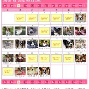 2021年365カレンダー(パピヨン)受付開始