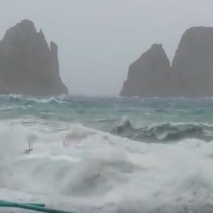 【Capri Musicscape】 こんな表情のカプリも見てみたくありませんか?
