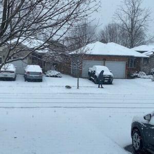 けっこうな雪が降りました