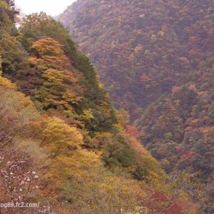 祖谷渓谷の紅葉(その2)