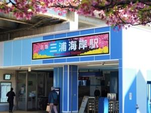 ワンコと三浦海岸の河津桜