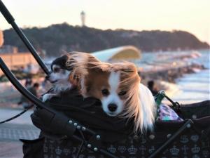 片瀬西浜海岸(江ノ島)からの夕日